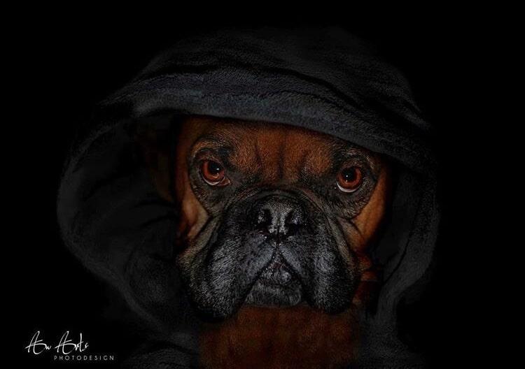 Tierfotografie von Awarts